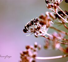 Summer Fading by Chris Armytage™