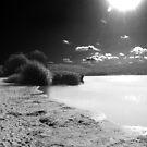 Black & White Landscape Frensham by shakey123