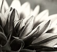 The sun still shines in black & white by Celeste Mookherjee