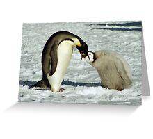 Emperor Penguin Feeding Chick, Antarctica  Greeting Card