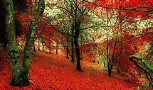 Autumn Magic by JaninesWorld