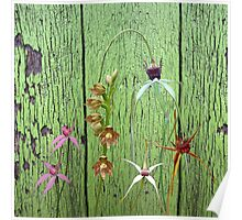 Cerise spider orchid on green paint Poster