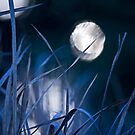 Blue Moon by Sarah Moore