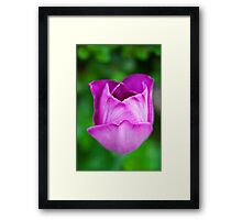 Purple on Green Framed Print