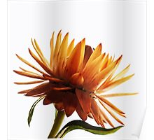 Strawflower #2 Poster