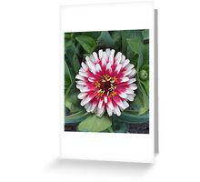 Red or Pink & Pretty Pom-Pom? Greeting Card