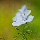 Flax flowers by M a r t a P h o t o g r a p h y
