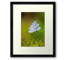 Flax flowers Framed Print