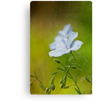 Flax flowers Canvas Print