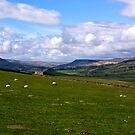 Wensleydale by Trevor Kersley