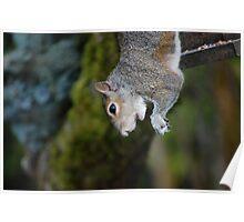 Hanging Around The Birdfeeder Poster