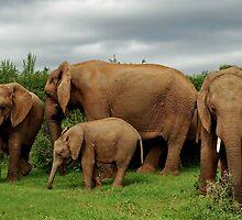 Jumbo Family by Macky