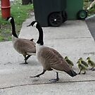 What a lovely family that came by to visit by ZeeZeeshots
