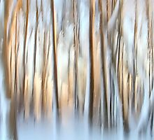 Winter Trees Abstract by ezindo