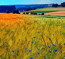 Fields of summer with flowers and scenery by Patrick Jobst