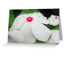 Drops On Ivory Petals Greeting Card