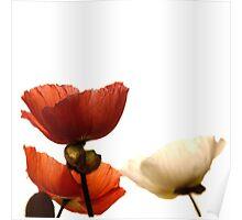 Poppy #2 Poster