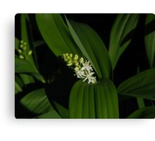 Little Bloom Canvas Print