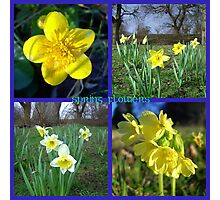 Yellow Spring flowers  ~ Marigold, Daffodils & Oxlips Photographic Print