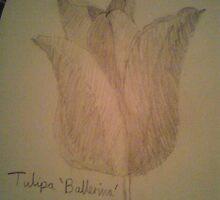 drew a flower called a Tulipa Ballerina by lollapoppy