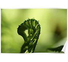 green loch Poster