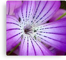 Concerto for Violet Canvas Print