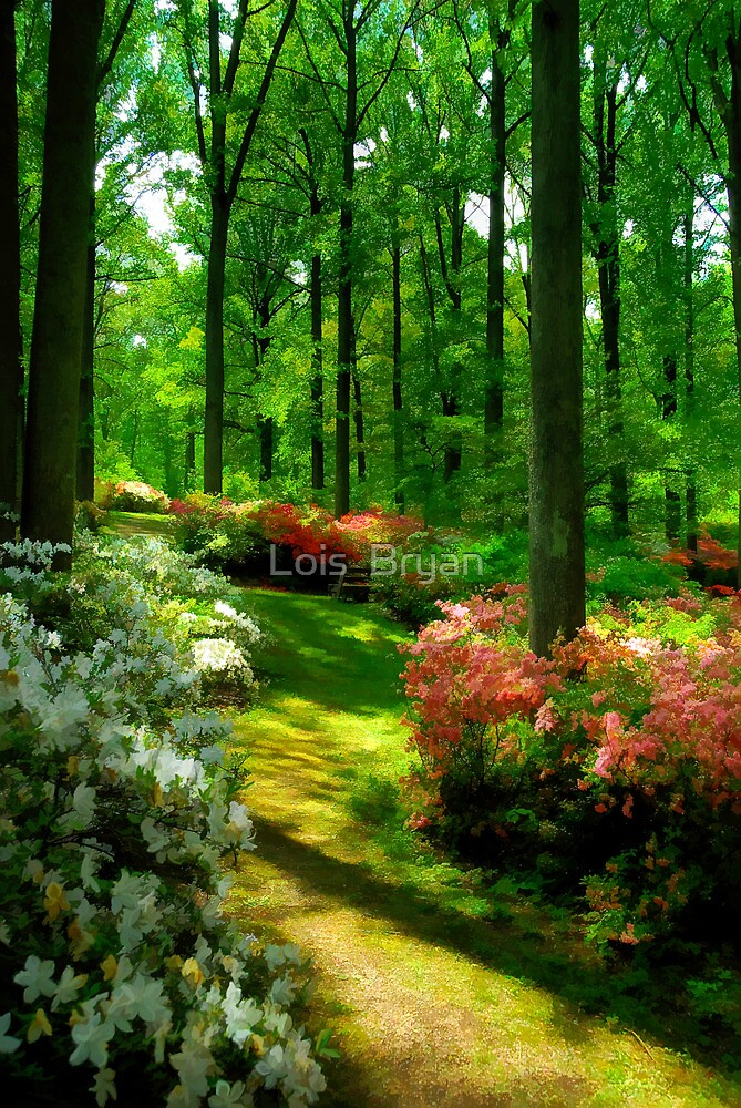 The Azaleas Are In Bloom Again by Lois  Bryan