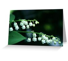 valley lily Greeting Card