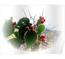 Ecuador Badlands Cacti Poster
