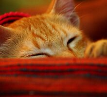 Colour me Red ... Cleo takes a nap by meowiyer