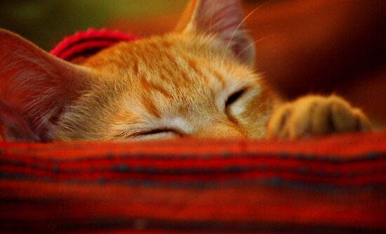 Colour me Red ... Cleo takes a nap by divya vijay pratheek