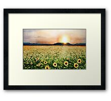 Sunflower Splatters Framed Print