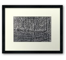 reflection of trees Framed Print