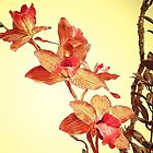 """Fine Art Silk Orchid Design"" by franticflagwave"