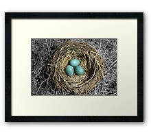 Birds Nest with Eggs Framed Print