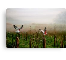Where are the grapes? Canvas Print