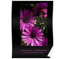 Weeds & Wildflowers Poster