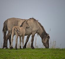A foal with its dam. by Henri Ton