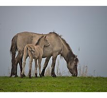 A foal with its dam. Photographic Print