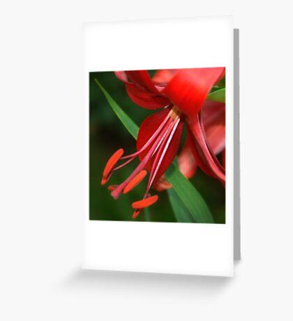 Impressive Red Greeting Card