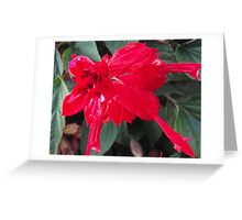 Right Red Flower Greeting Card