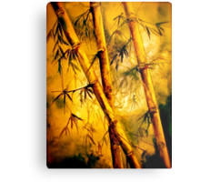 Tropics.. Heat and Old Bamboo Metal Print