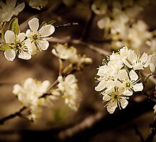 Blossoming Delights: Spring in Northern Wisconsin by Nicole DeFord