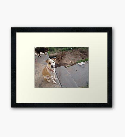 hi mom i didn't do it Framed Print