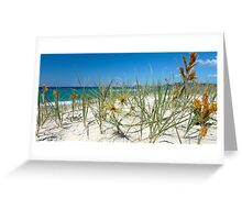 Spinifex on the dunes Greeting Card