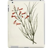 Familiar Flowers of India With Colored Plates, Lena Lowis 0029 Russelia Juncea iPad Case/Skin