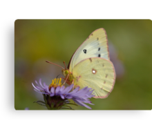 White butterfly and flower Canvas Print