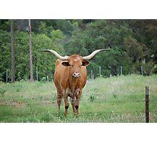 Central Texas LongHorn Photographic Print