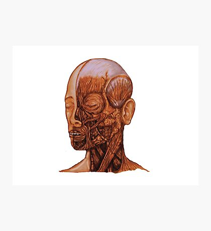 Anatomical Head and Neck dissection Photographic Print