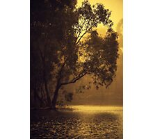 Golden Morning By Lorraine McCarthy Photographic Print